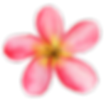 AlohaHawaii_14.png