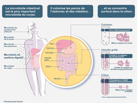 Comprendre comment fonctionne son microbiote intestinal