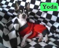 WebYodaJph.jpg