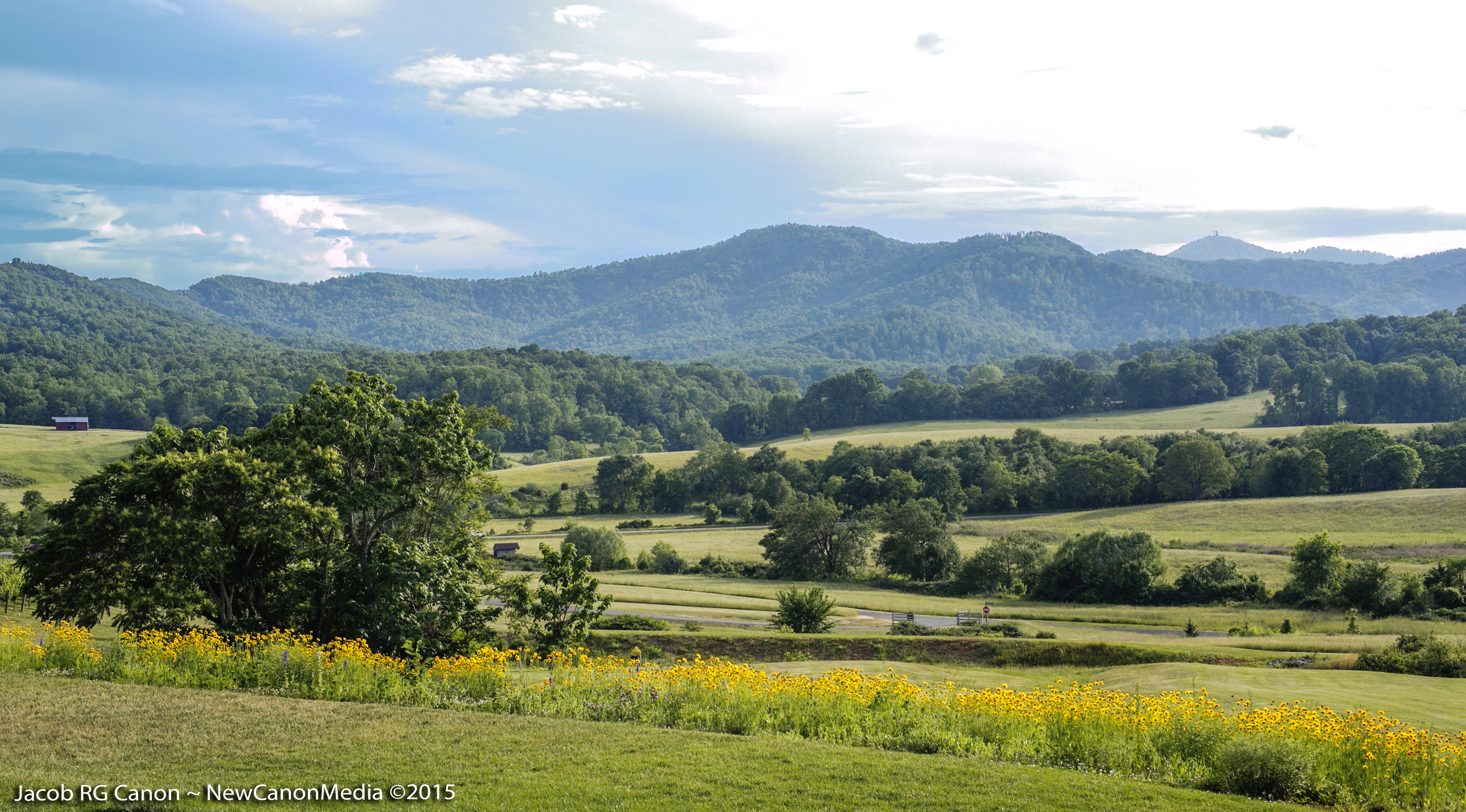 Pippin Hill gorgeous view.JPG