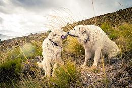 Shutterstock_LGD two on mountainside.jpg