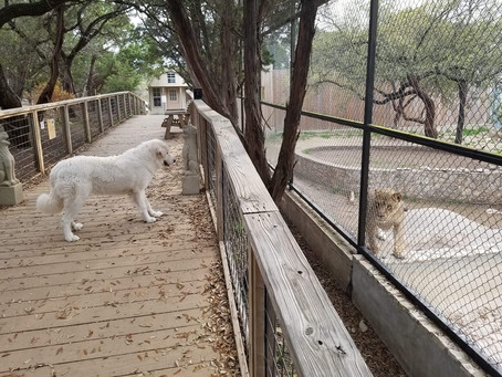 The Guardians of Austin Zoo