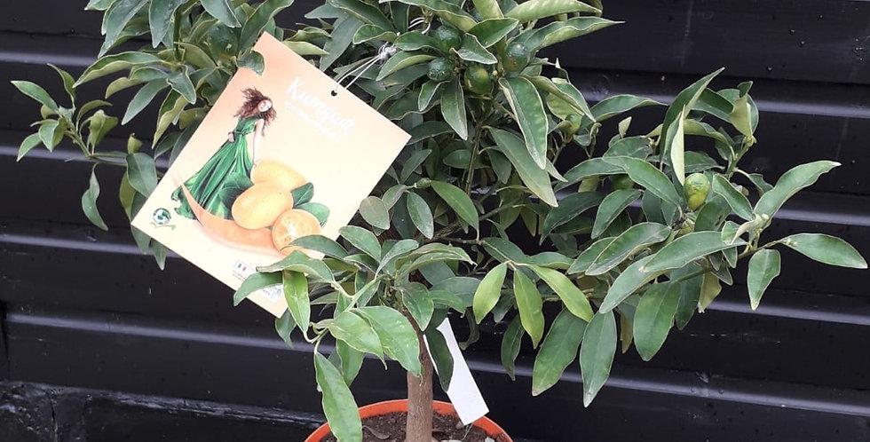 Secret Garden Plant