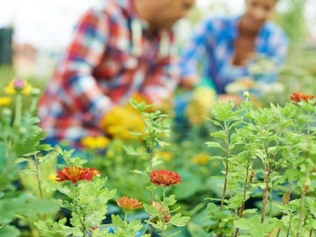 Tips To Winterize Your Flower Garden