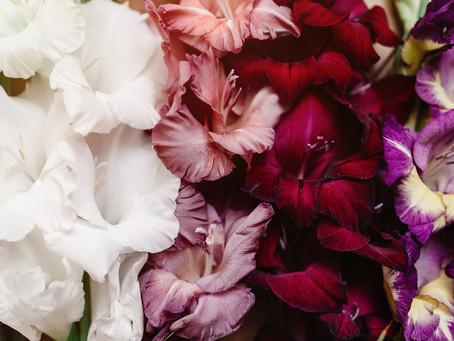 Flower Profile: Gladiolus
