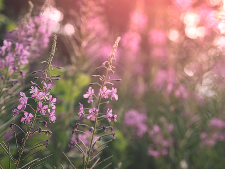 Enjoy Alberta Flowers
