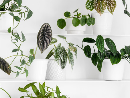 Caring For Plants While On Vacation