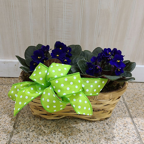 African Violet Duo