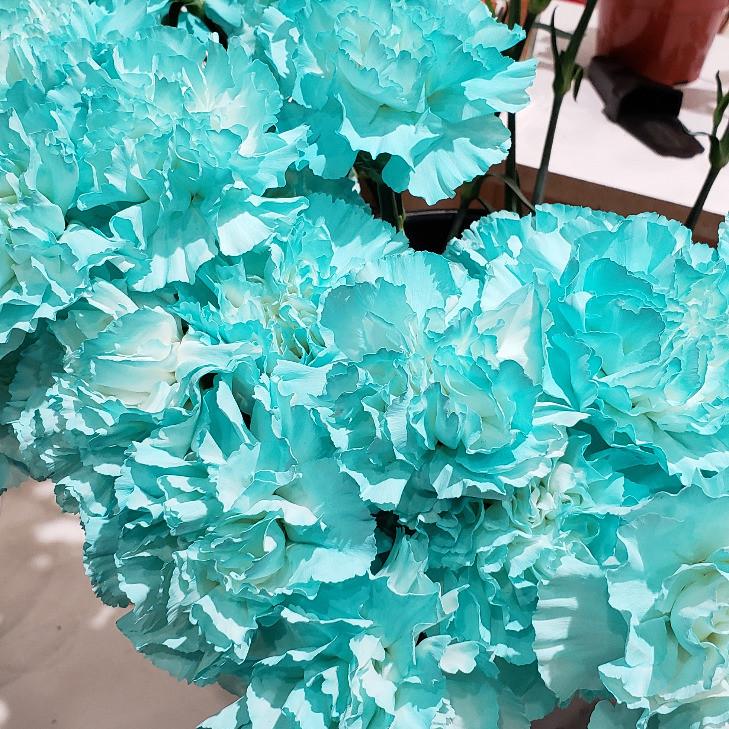 Aqua carnations