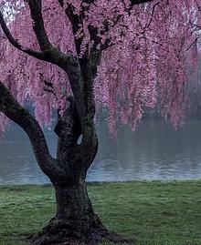 Tree in Philadelphia