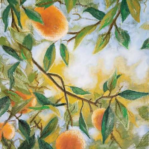 'Fruits of Light' (print)