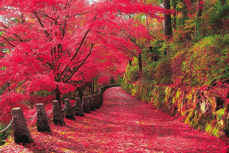 (迷你尺寸) 日本風景 - 吉野山之紅葉景 2016塊 (50×75cm)