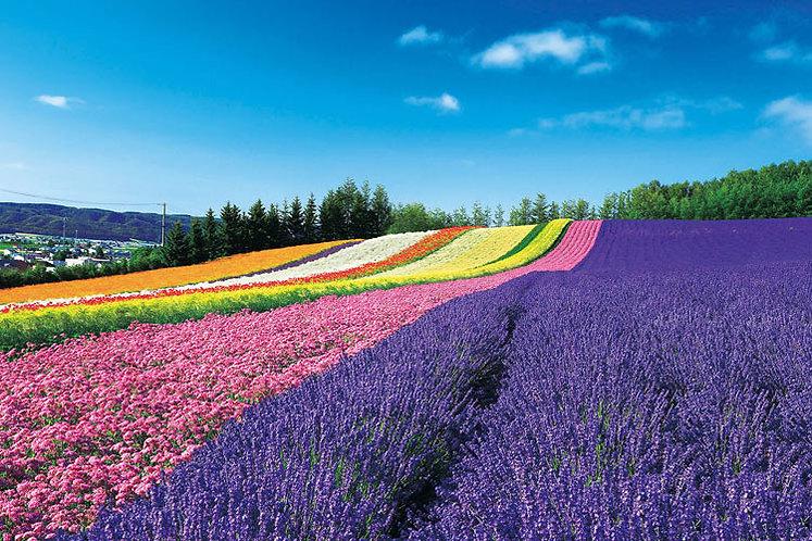 日本風景 - 彩虹山丘 1000塊 (50×75cm)