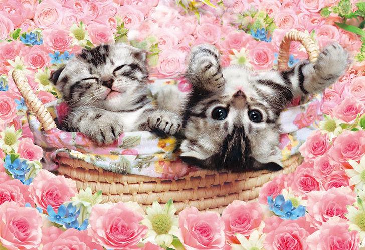 動物類 - 小籃上的蘇格蘭摺耳貓 300塊 (26×38cm)