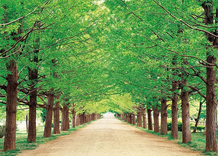 日本風景 - 東京綠葉小徑 500塊 (38×53cm)
