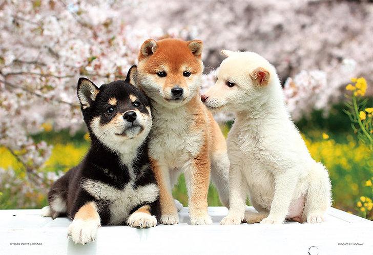 動物類 - 柴犬好朋友 300塊 (26×38cm)