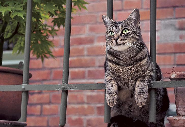 岩合光昭 - 一隻貓在巴黎 300塊 (26×38cm)
