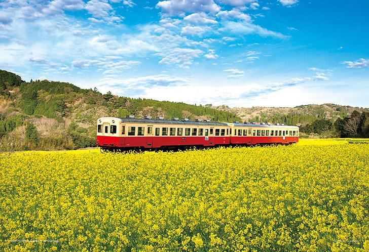日本風景 - 茶花田間之列車 300塊 (26×38cm)
