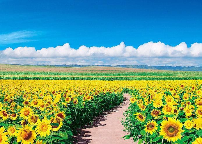 日本風景 - 北海道向日葵 500塊 (38×53cm)