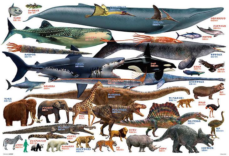動物類 - 巨型生物體積比較 1000塊 (49×72cm)