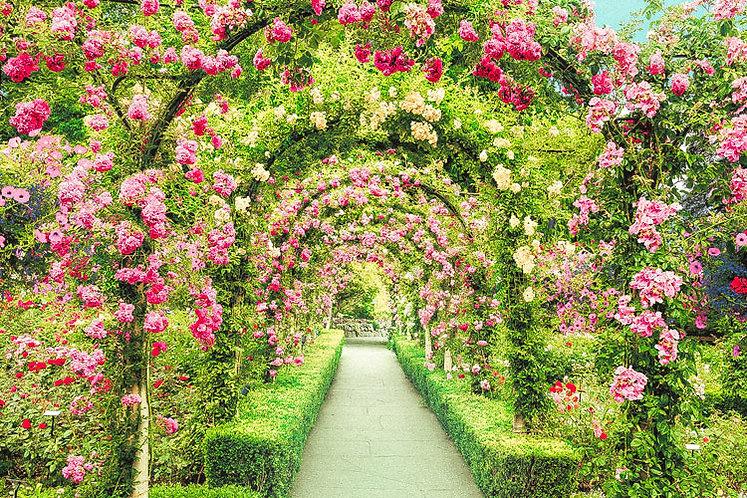 (迷你尺寸) 加拿大風景 - 布查德花園 2016塊 (50×75cm)