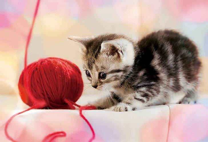 動物類 - 玩毛球的短毛貓 300塊 (26×38cm)