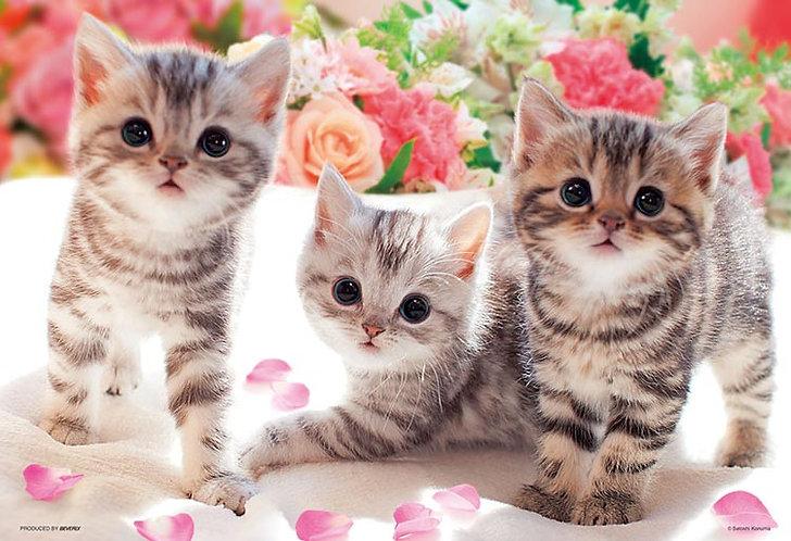 動物類 - 貓咪放題 300塊 (26×38cm)