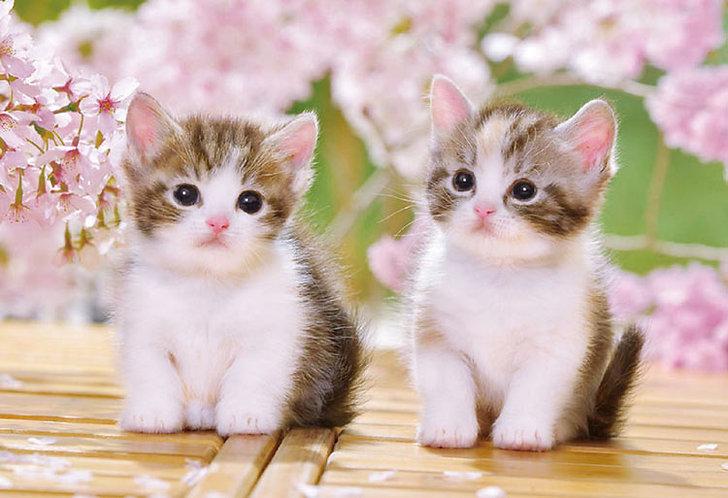 動物類 - 坐在地上的小貓 300塊 (26×38cm)