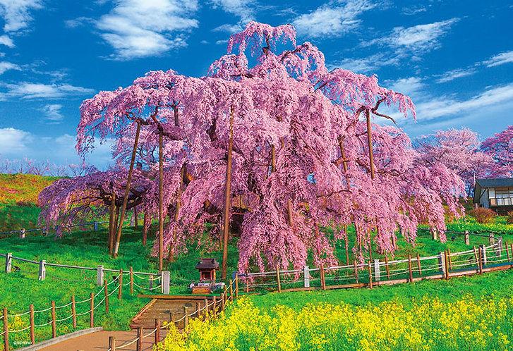 日本風景 - 盛開之三春瀧櫻 300塊 (26×38cm)