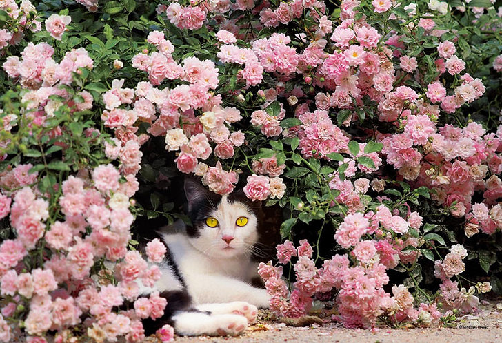岩合光昭 - 貓媽媽的休閒下午 300塊 (26×38cm)