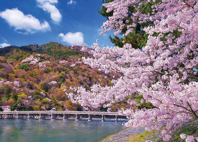 日本風景 - 櫻花盛開之渡月橋 500塊 (38×53cm)