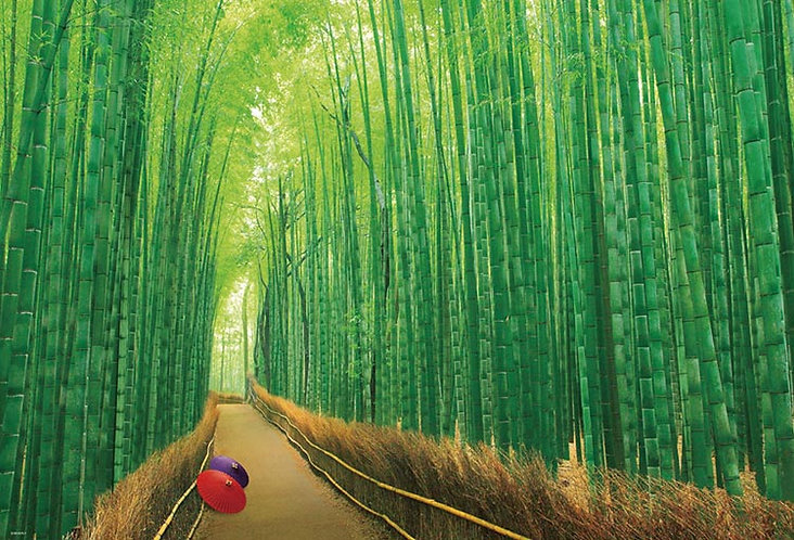 日本風景 - 嵯峨野竹林 1000塊 (49×72cm)