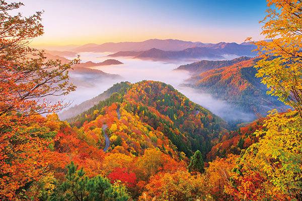 日本風景 - 秋天紅葉之道路 1000塊 (50×75cm)