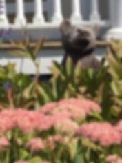 Bear in the garden.JPG