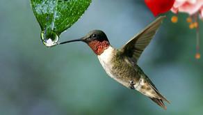 La légende des colibris? What is it?