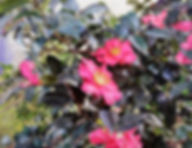 冬の花F6結城唯善.jpg
