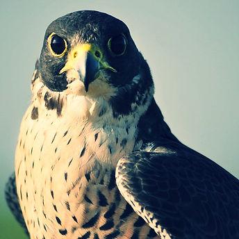 Photo d'oiseau