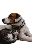 dog and cat white background.png