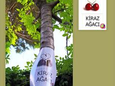 Yelken Anaokulu Ağaçları