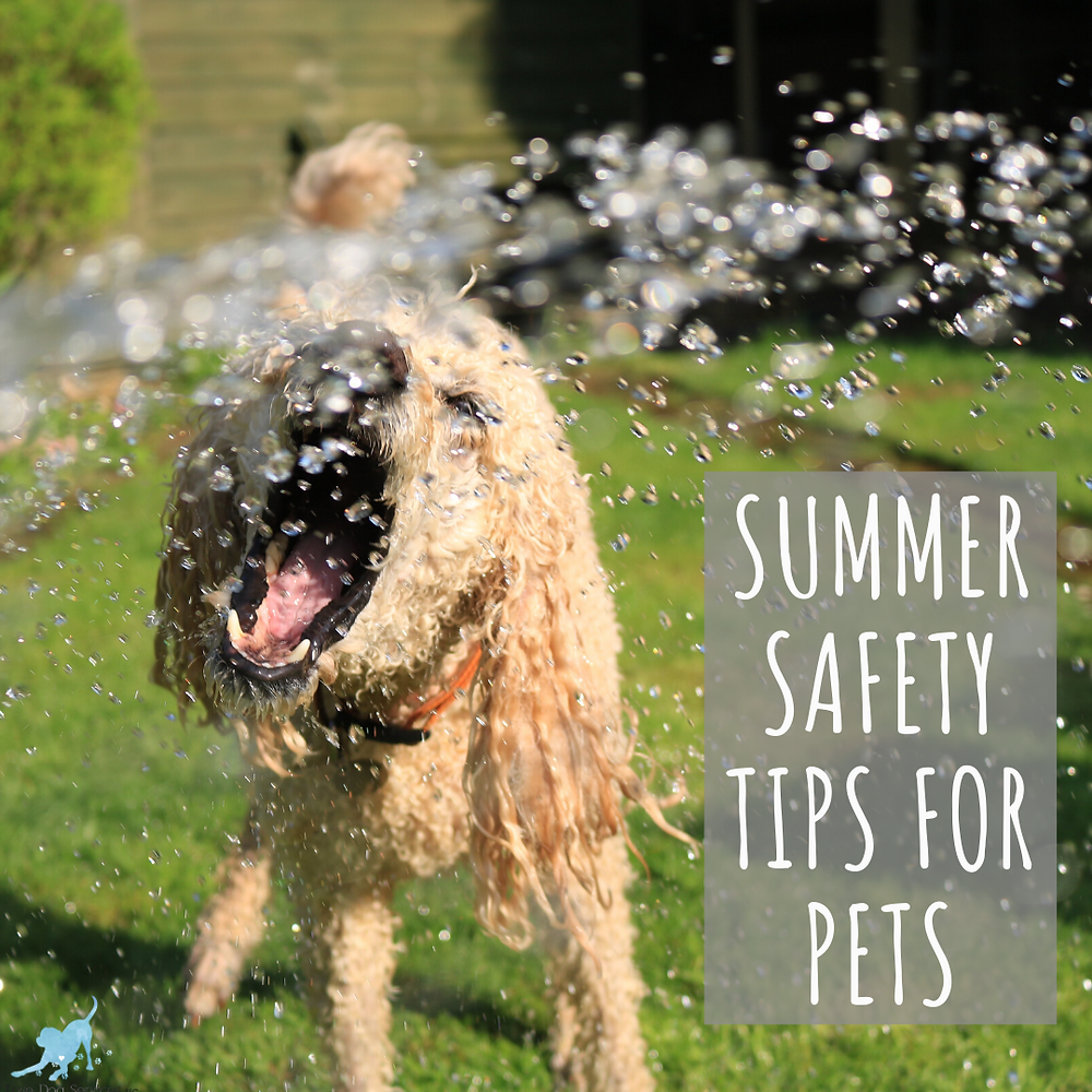 """Dog drinking water from hose and text """"summer safety tips for pets"""""""