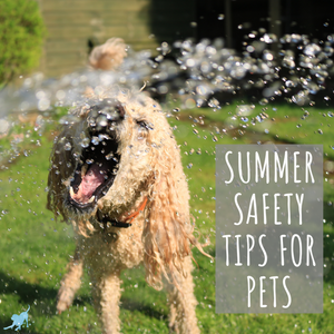 "Dog drinking water from hose and text ""summer safety tips for pets"""