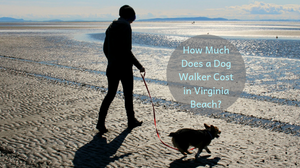 Girl and dog walker on beach  | How much does a Dog Walker Cost in Virginia Beach?