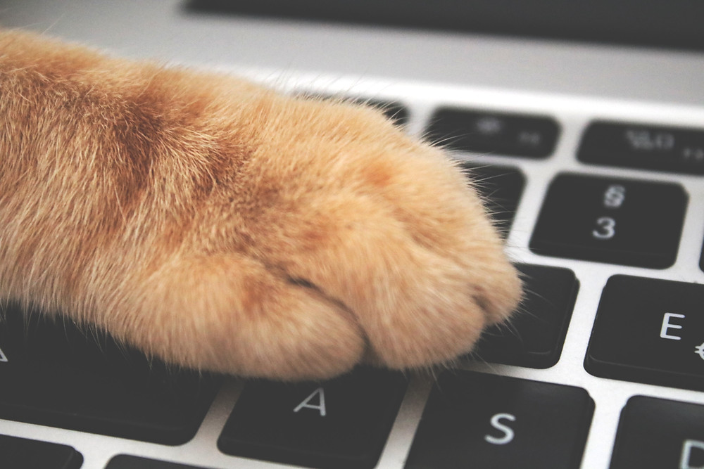 Cat Paw on laptop keys