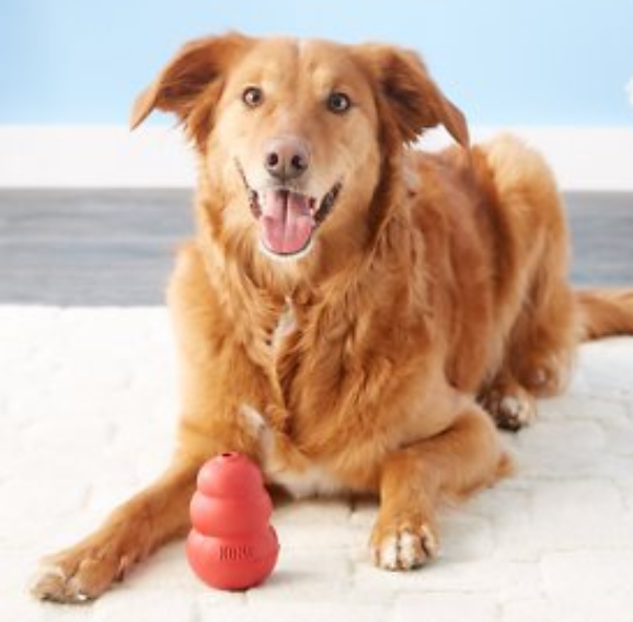 Dog with Red Kong.