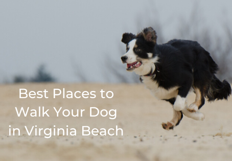Best Places to Walk Your Dog in Virginia Beach