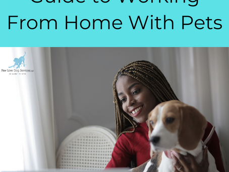 Guide to Working From Home With Pets