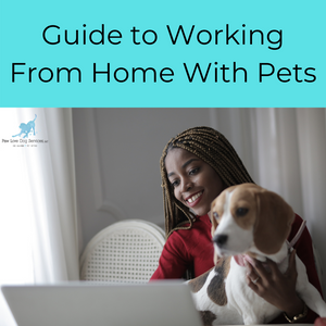 Guide to Working from Home with Pets and a woman at her lap top with a dog in her lap