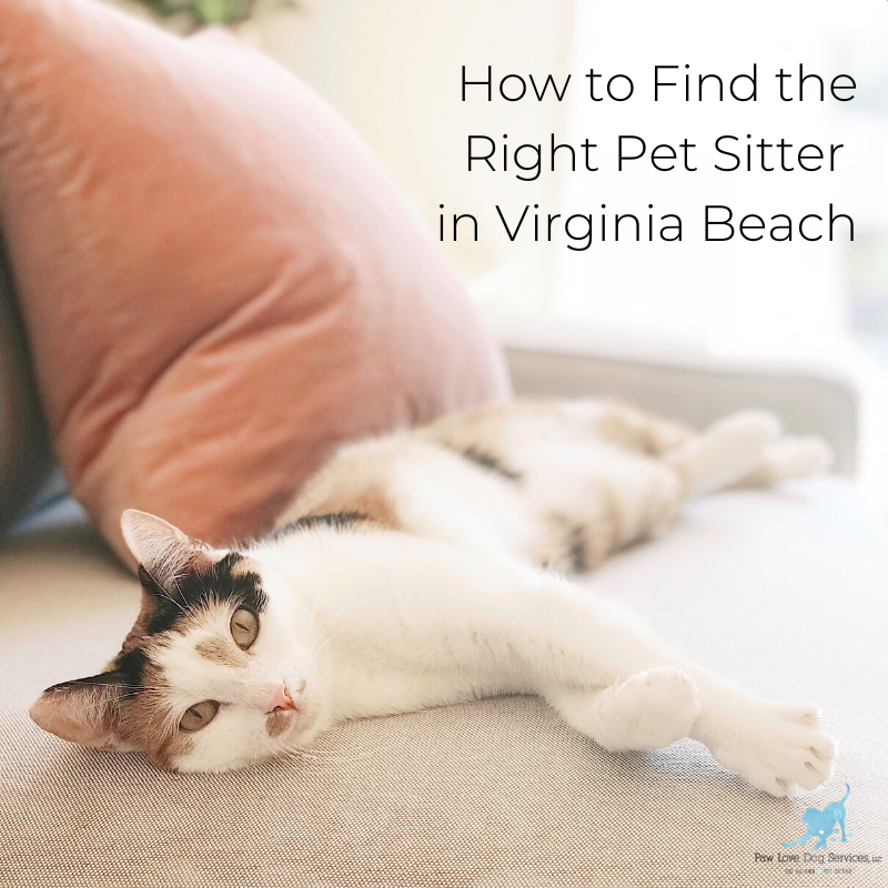 Cat laying comfortable | How to find the right pet sitter in Virginia Beach