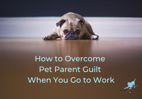 How to Overcome Pet Parent Guilt When You Go to Work