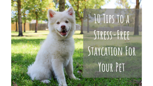 """Dog with text """"10 Tips to a Stress-Free Staycation for Your Pet"""""""